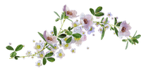 flower/fleur branche/branch_Blue DREAM 70
