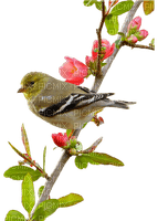 spring printemps frühling primavera весна wiosna   bird oiseau oiseaux vogel vögel birds deco tube branch zweig flower fleur garden jardin