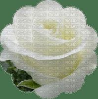 trandafir 34