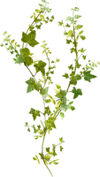 dolceluna green leaves