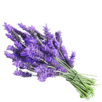 lavender lavendel lavande flower fleur blossom blumen deco tube spring printemps fleurs