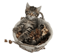 chat cat autumn automne
