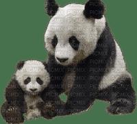 Kaz_Creations Animals Pandas Panda
