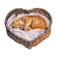 cat  basket chat panier