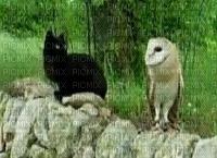 fundo gato coruja