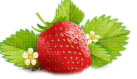 strawberry with leaves fraise feuille