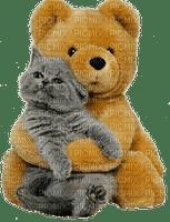 chat cat teddy fun