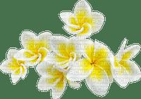 flower fleur blossom blumen tropics