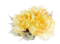 Yellow roses Joyful226
