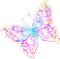 COLORFUL BUTTERFLY TRANSPARENT