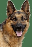 German Shepherd face png