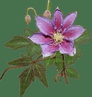 kukka flower fleur