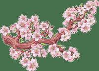 rosa Ast