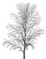 tree-plant-snow-winter-decoration