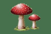 sieni, mushroom, syksy, autumn