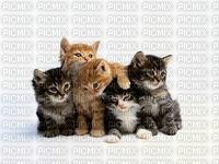 gatos, filhotes