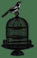 Bird.Cage.Oiseau.Deco.Jaula.Victoriabea