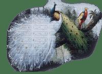 peacock white paon blanc