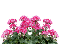 room raum espace chambre  habitación zimmer window fenster fenêtre  spring summer  ete printemps tube  flower fleur blumenkasten box boîte à fleurs blumen