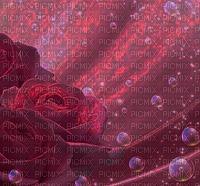 red rose  velvet background