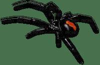 Spider - Bogusia