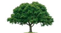 tree arbre baum summer spring garden forest deco tube jardin