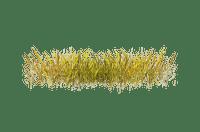 gräs---.-grass