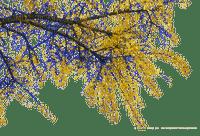 branch, tree blossom, sunshine3