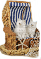 cats white summer beach chair chats blanc êtê chaise de plage