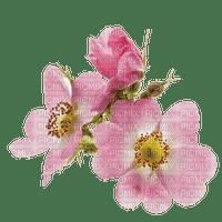 Fleur.Flower.Victoriabea