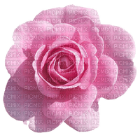 image encre fleur rose coin anniversaire mariage edited by me