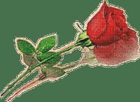 Rosa sombreada
