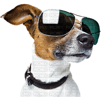 chien lunette  dog sunglasses