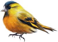 Kaz_Creations Birds Bird Blue-Yellow