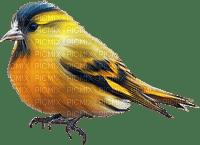 Kaz_Creations Birds Bird Blue-Yellow