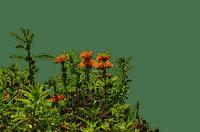 flowers NitsaP