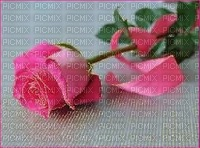 Pink Rosese
