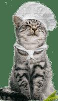 chat cuisinier