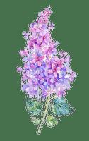 Lilacs  Bb2