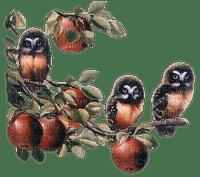 owl eule hibou branch