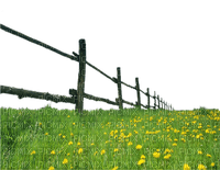 fence grass flowers clôture herbe fleur