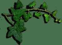 Efeuranke