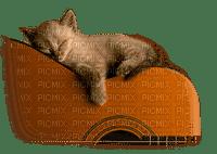 cat sleeping  guitar chat