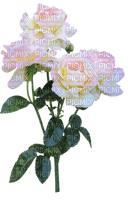 ruusu, kukka, fleur, flower