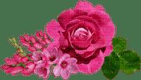 rose ruusu kukka flower fleur