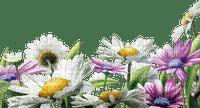 cadre,camomilles,fleur,summer,tube, deko,scrapbooking Pelageya