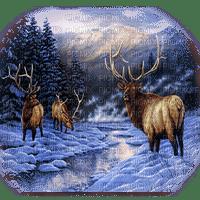 winter deer hiver cerf