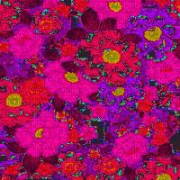 pink flower bg overlay transparent  pink fleurs fond