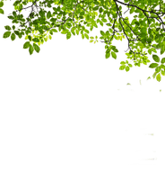 green leaves border vert feuilles bordure