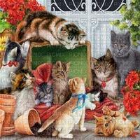 Katze, chat, cat